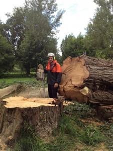 Abattage elagage arbre 93 seine-saint-denis Oise Arbotecnic